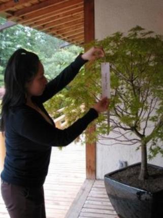 Lễ thất tịch ở Nhật Bản
